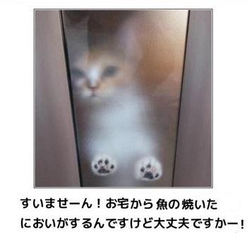 cat100.jpg