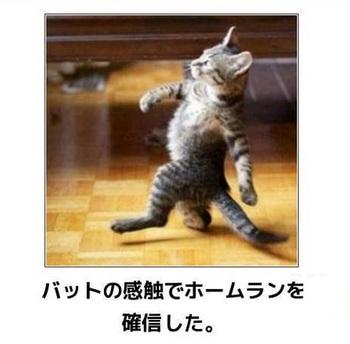 cat104.jpg