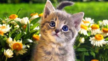 cat40.jpg