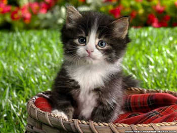cat53.jpg