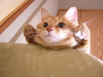 cat573.jpg