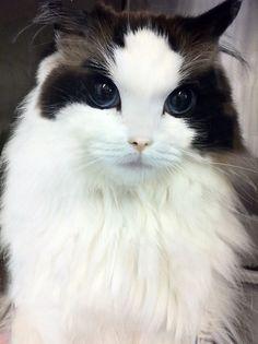 cat5d.jpg