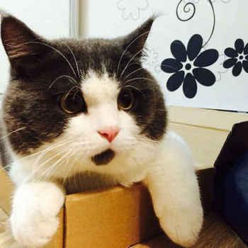 cat60.jpg