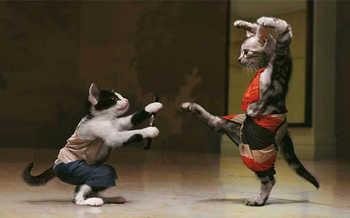 cat706.jpg