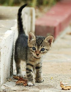 cat75f.jpg