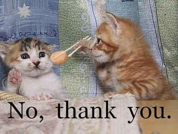 cats09.jpg