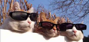 cats201.jpg