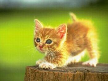 cute08.jpg