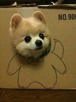 dog44.jpg