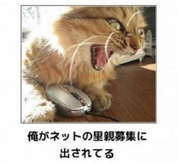 cat137.jpg